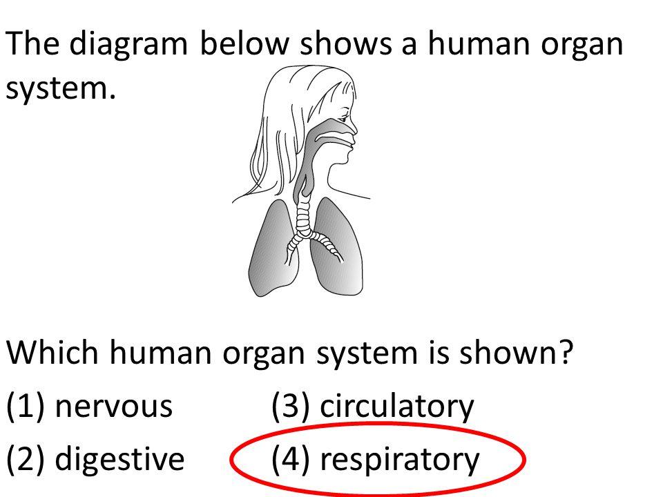 The diagram below shows a human organ system