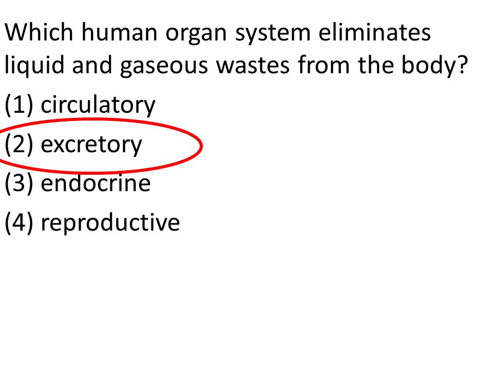 Which human organ system eliminates liquid and gaseous wastes from the body.