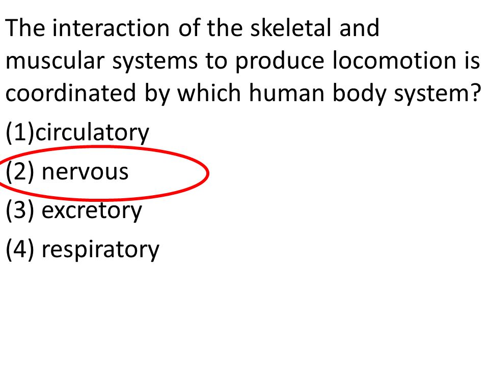 The interaction of the skeletal and muscular systems to produce locomotion is coordinated by which human body system