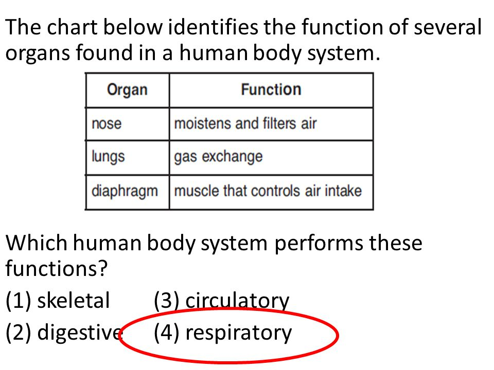The chart below identifies the function of several organs found in a human body system.