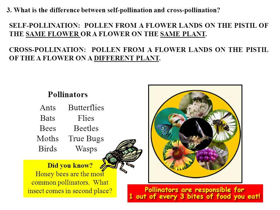 Ants Bats Bees Moths Birds Butterflies Flies Beetles True Bugs Wasps