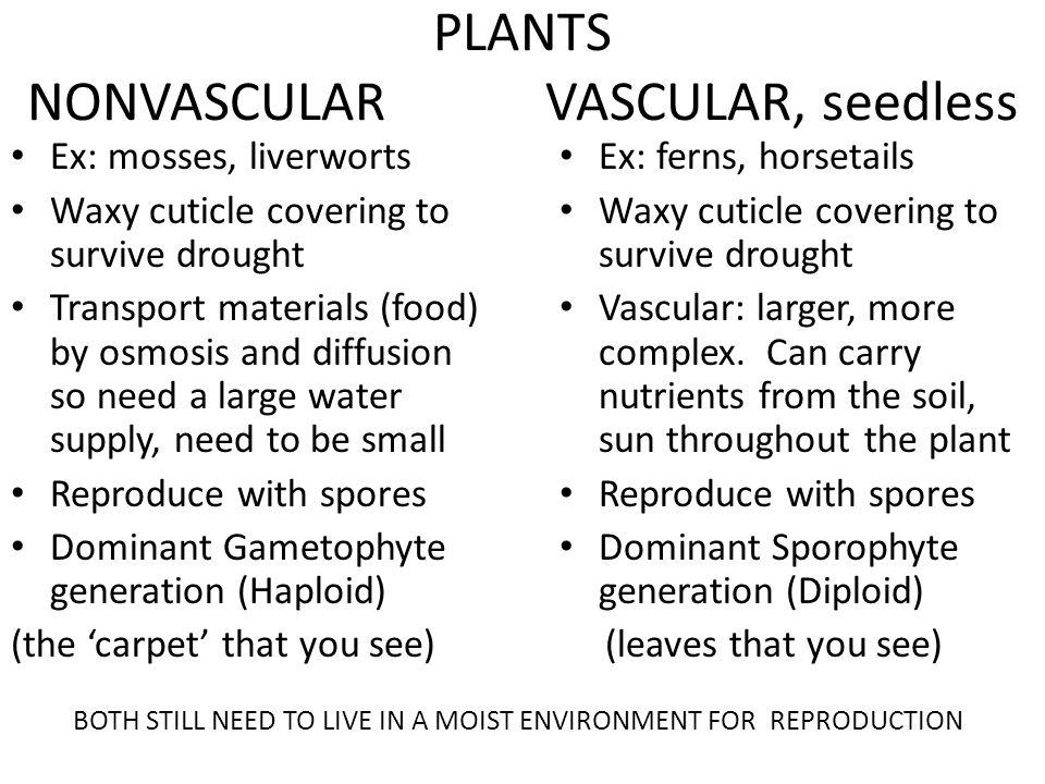 PLANTS NONVASCULAR VASCULAR, seedless