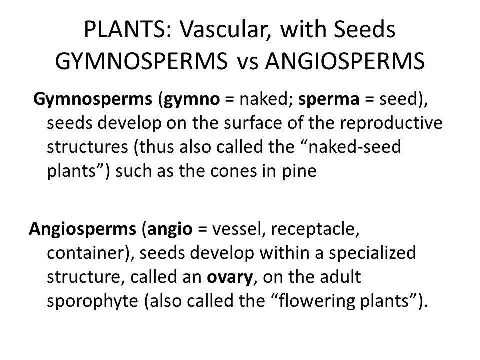 PLANTS: Vascular, with Seeds GYMNOSPERMS vs ANGIOSPERMS