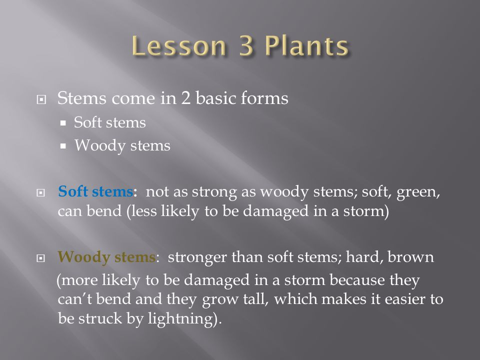 Lesson 3 Plants Stems come in 2 basic forms Soft stems Woody stems