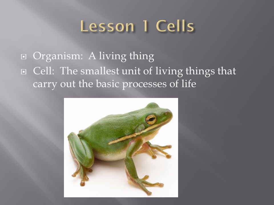 Lesson 1 Cells Organism: A living thing