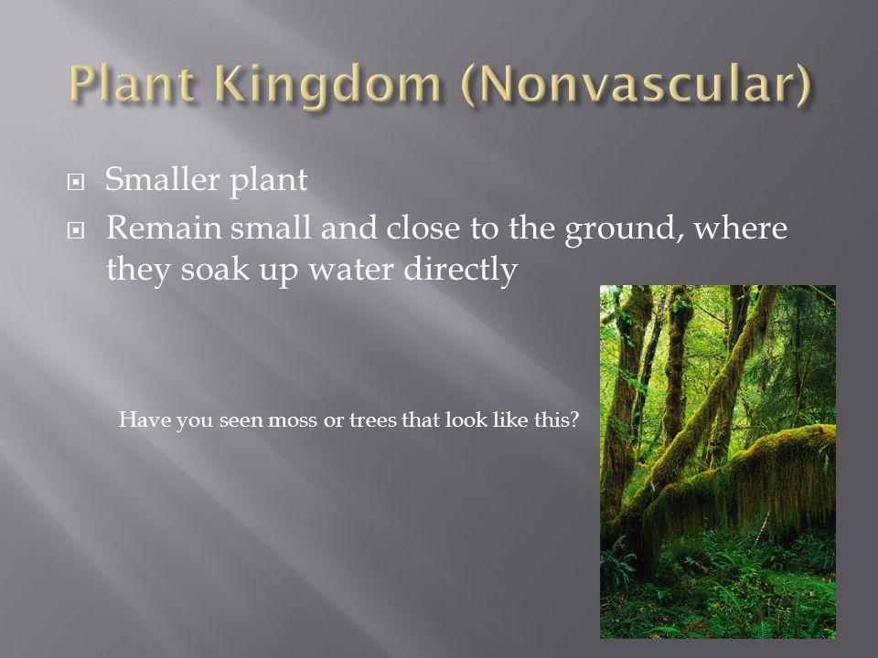 Plant Kingdom (Nonvascular)