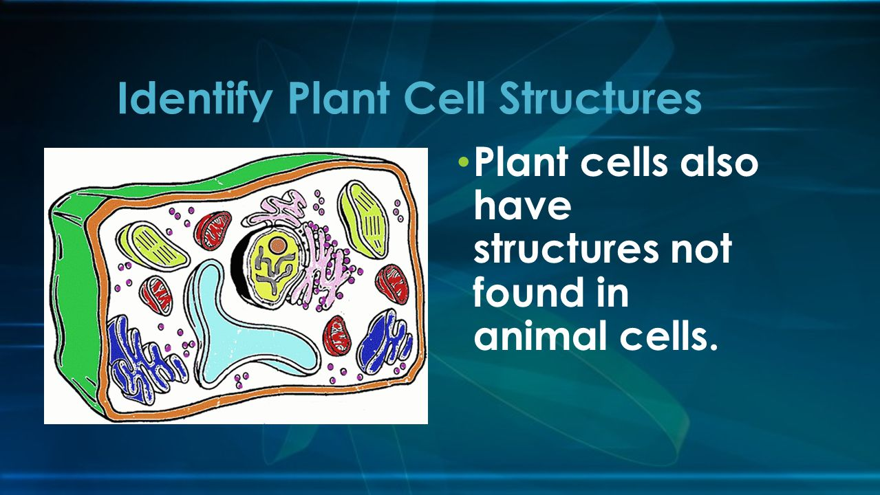 Identify Plant Cell Structures