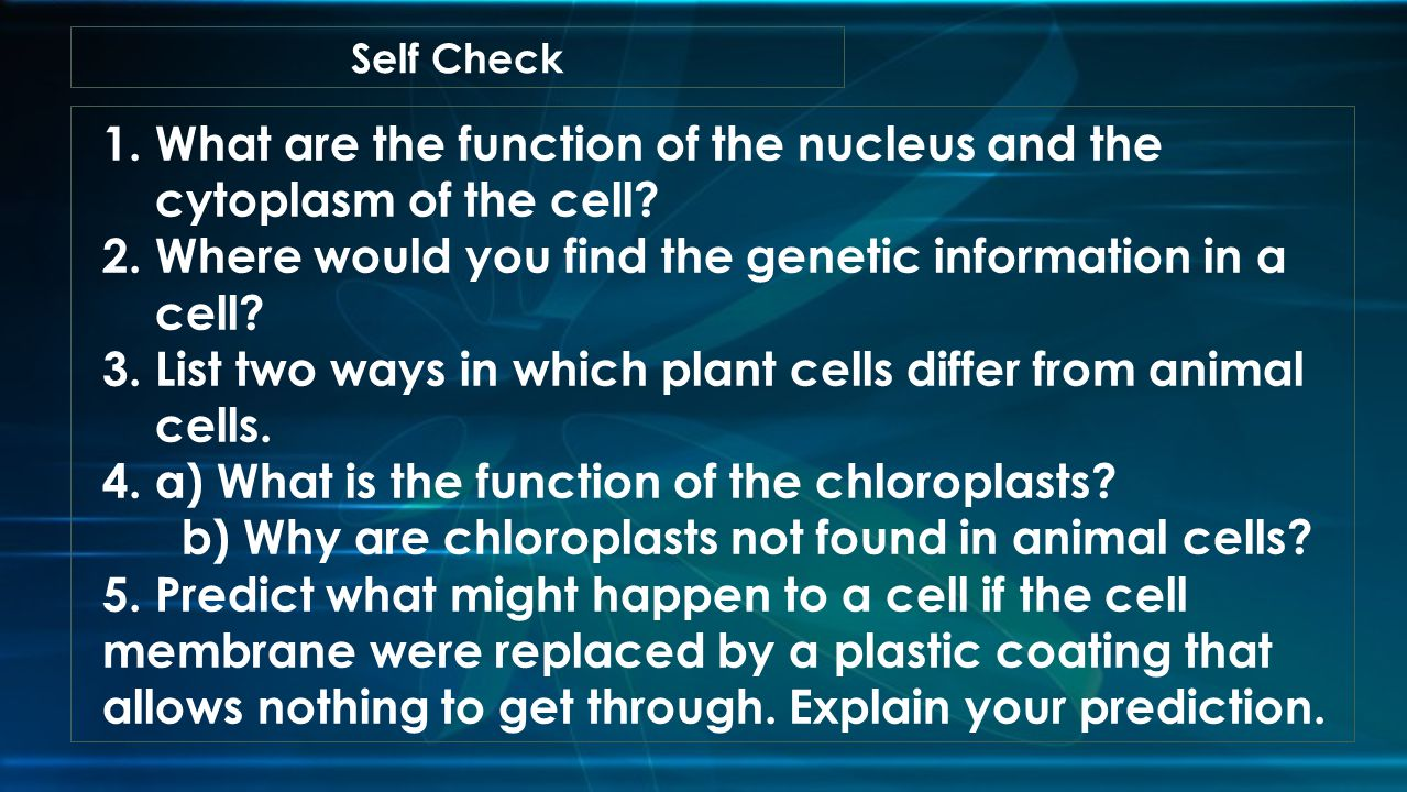 What are the function of the nucleus and the cytoplasm of the cell
