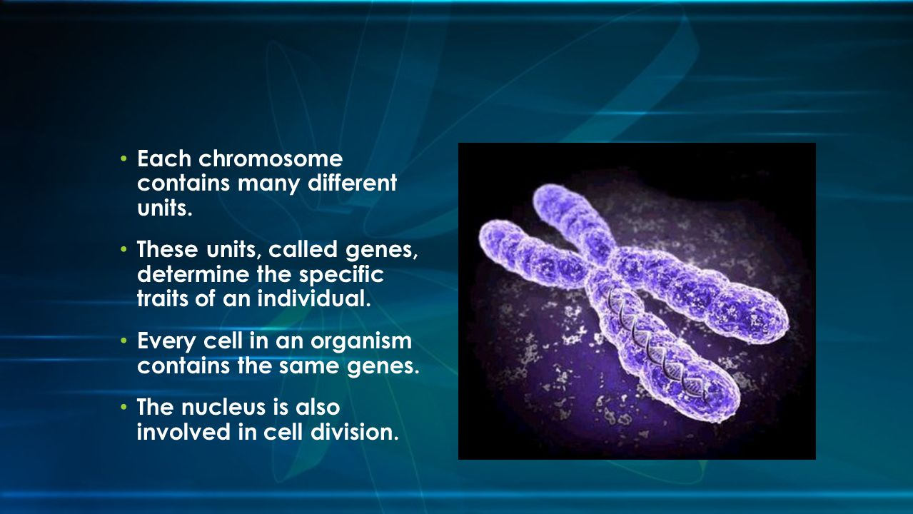 Each chromosome contains many different units.