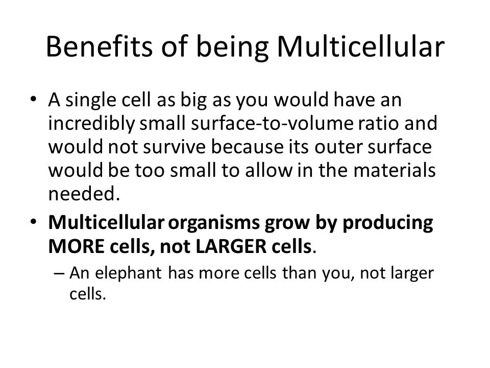 Benefits of being Multicellular