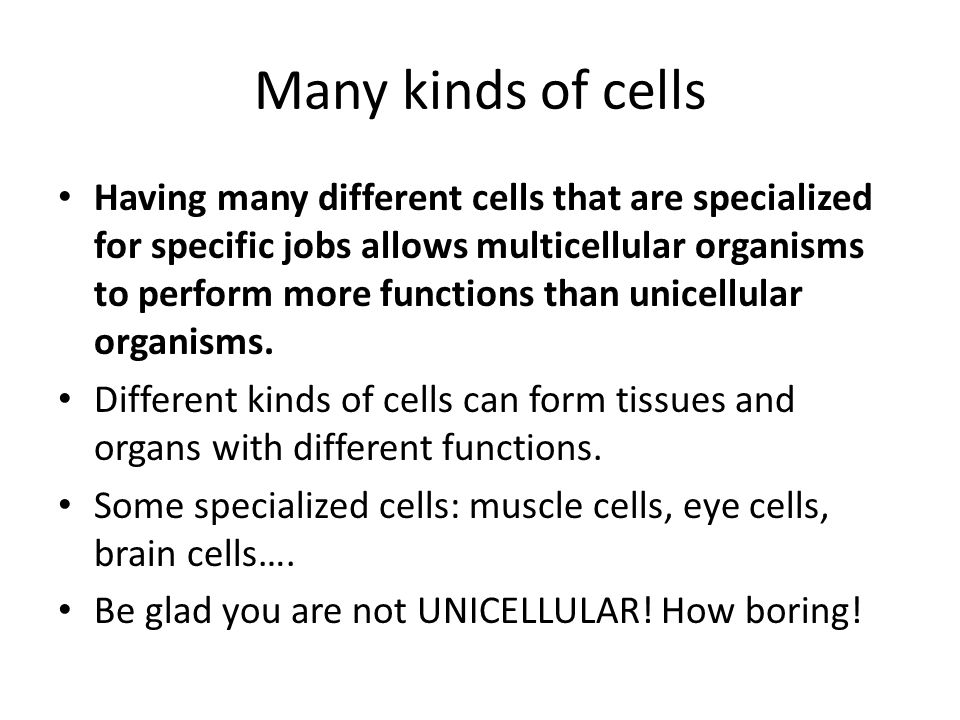Many kinds of cells
