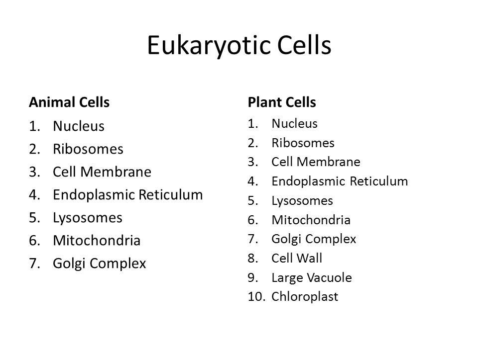 Eukaryotic Cells Animal Cells Plant Cells Nucleus Ribosomes