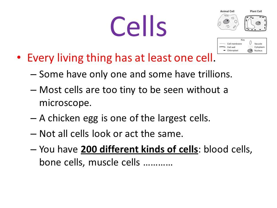 Cells Every living thing has at least one cell.