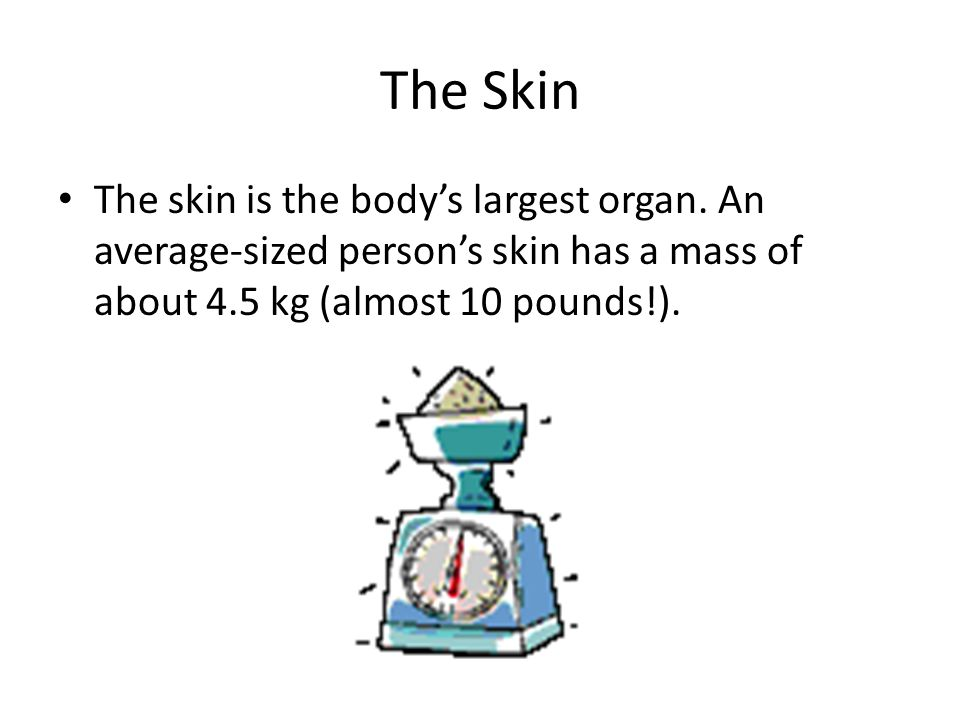 The Skin The skin is the body's largest organ.