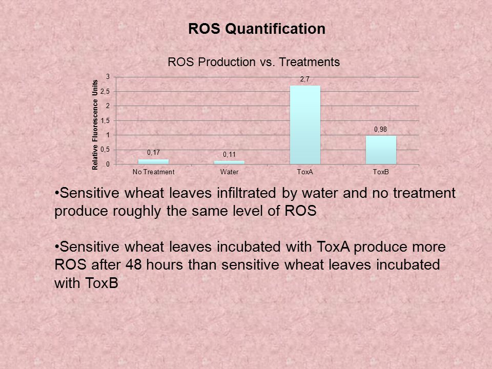 ROS Quantification Sensitive wheat leaves infiltrated by water and no treatment produce roughly the same level of ROS.