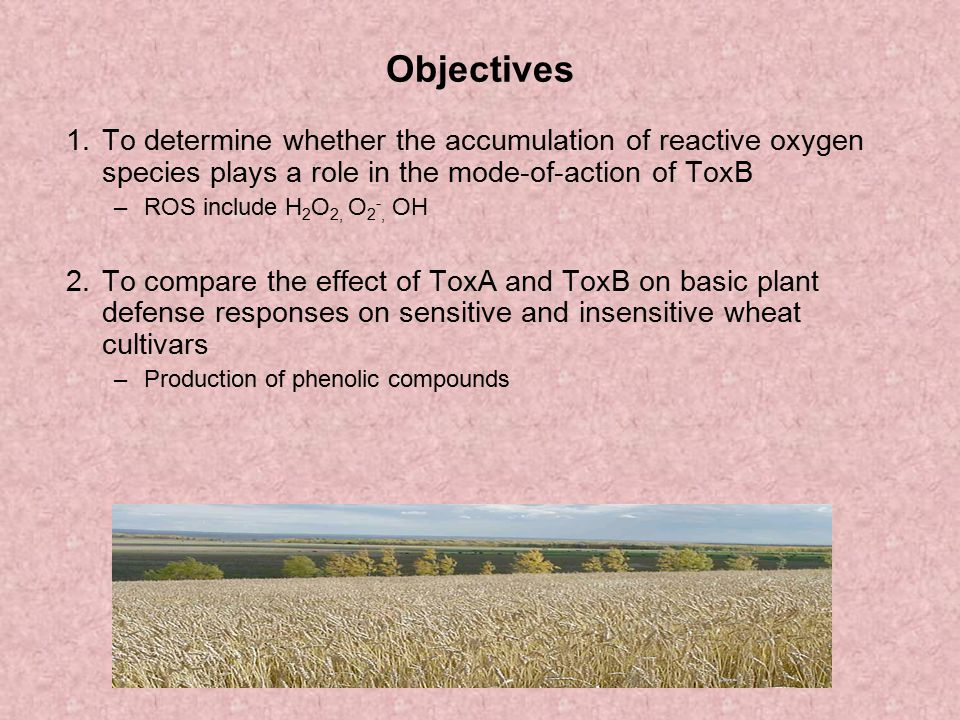 Objectives 1. To determine whether the accumulation of reactive oxygen species plays a role in the mode-of-action of ToxB.
