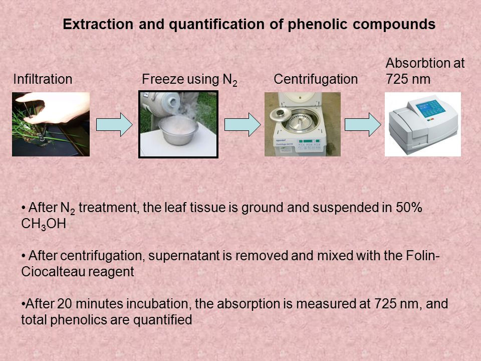 Extraction and quantification of phenolic compounds