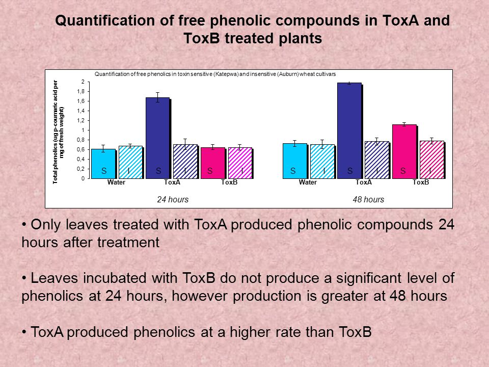 ToxA produced phenolics at a higher rate than ToxB