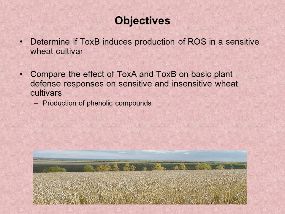 Objectives Determine if ToxB induces production of ROS in a sensitive wheat cultivar.