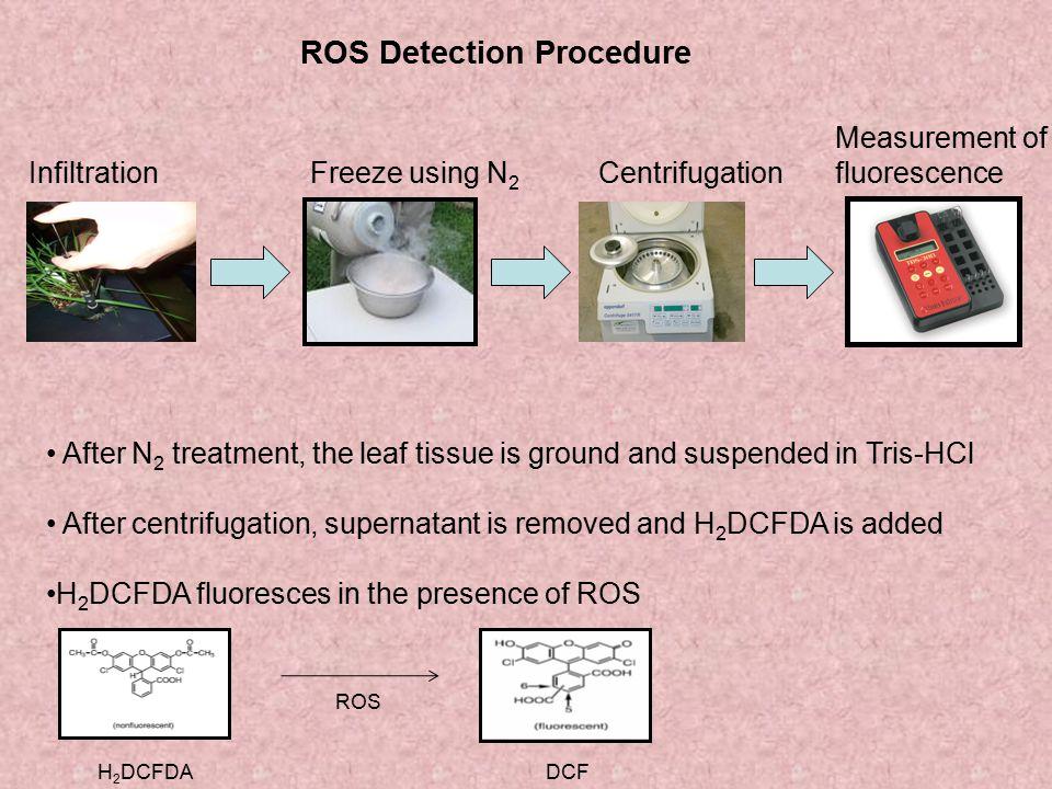ROS Detection Procedure