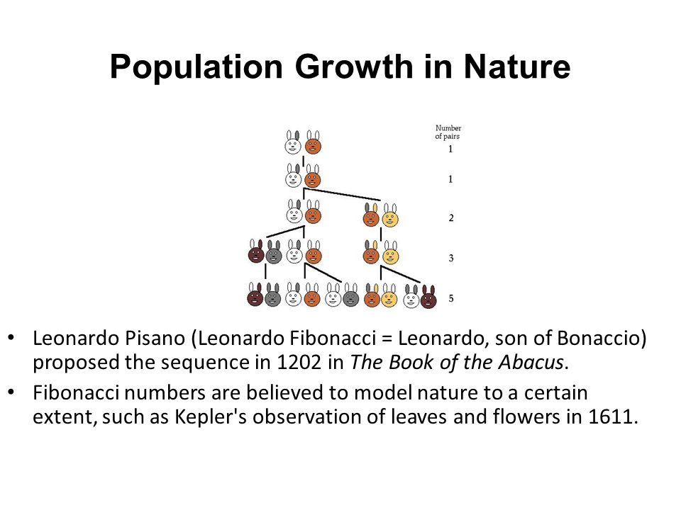Population Growth in Nature