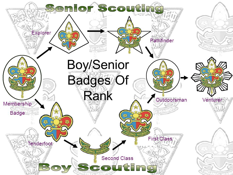 Boy/Senior Badges Of Rank