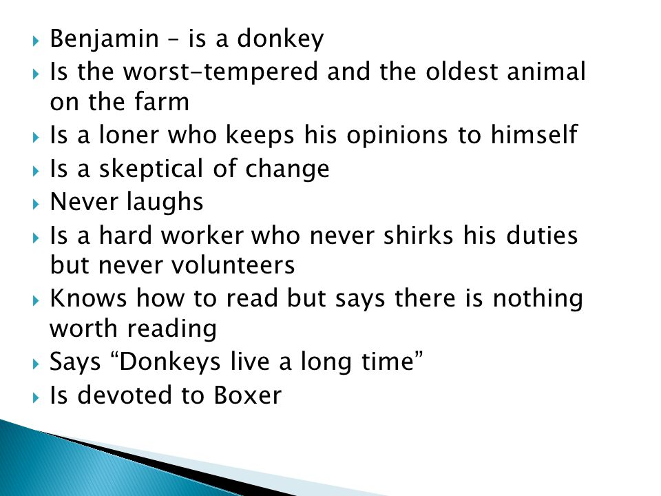 Benjamin – is a donkey Is the worst-tempered and the oldest animal on the farm. Is a loner who keeps his opinions to himself.