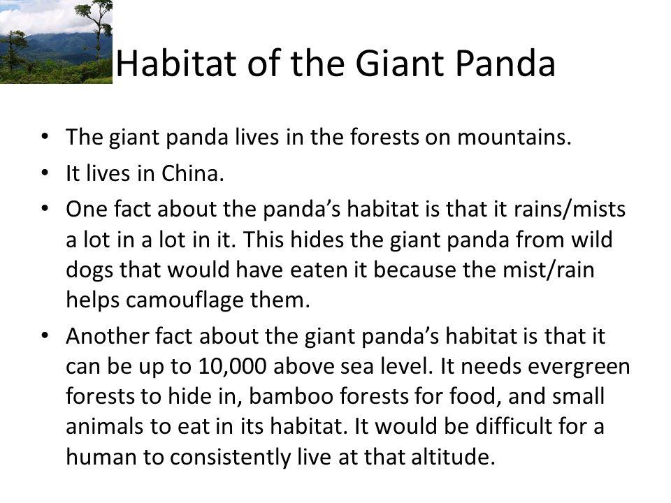 Habitat of the Giant Panda