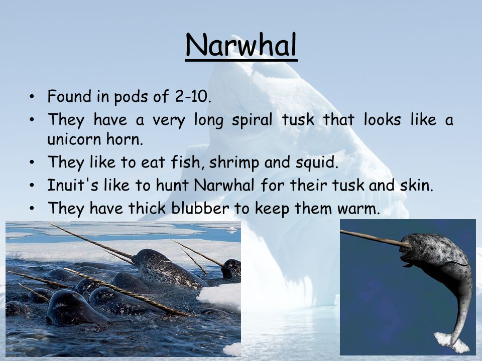 Narwhal Found in pods of 2-10.