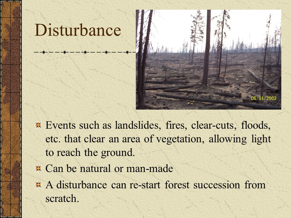Disturbance Events such as landslides, fires, clear-cuts, floods, etc. that clear an area of vegetation, allowing light to reach the ground.