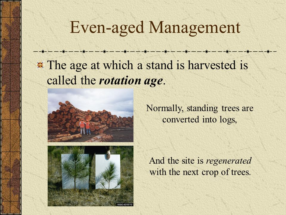 Even-aged Management The age at which a stand is harvested is called the rotation age. Normally, standing trees are converted into logs,