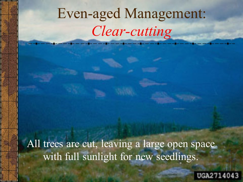 Even-aged Management: Clear-cutting