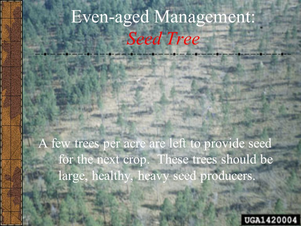 Even-aged Management: Seed Tree