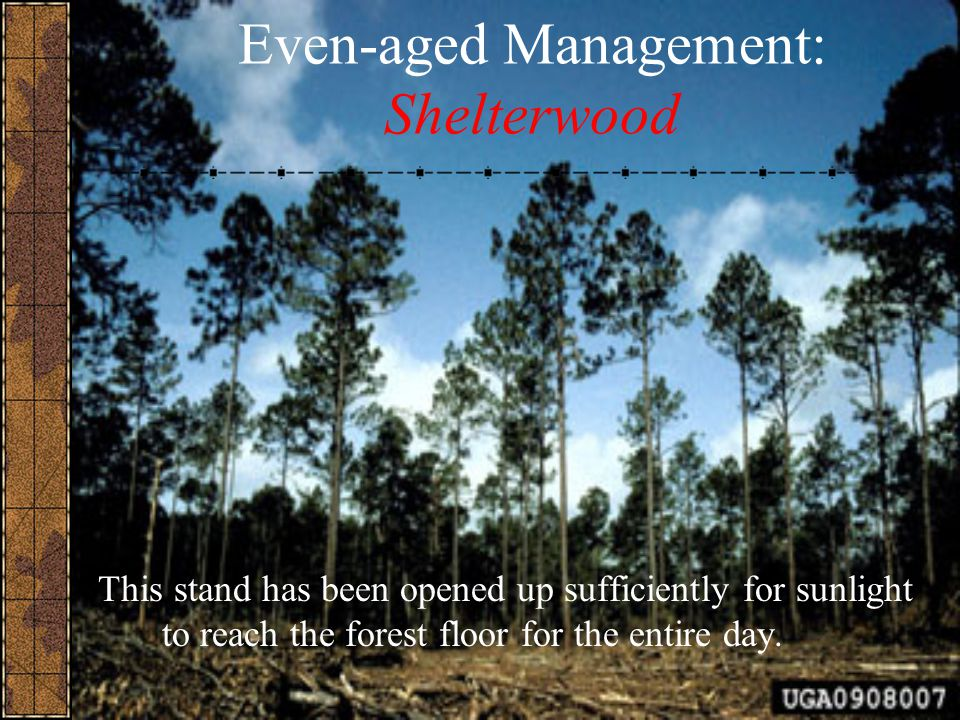 Even-aged Management: Shelterwood