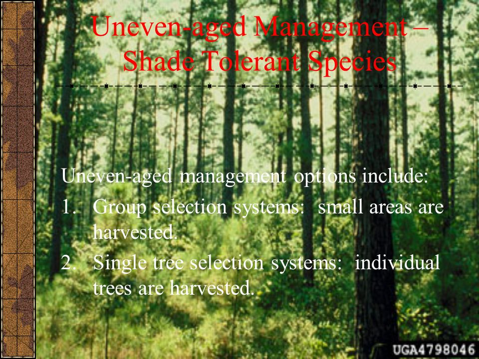 Uneven-aged Management – Shade Tolerant Species