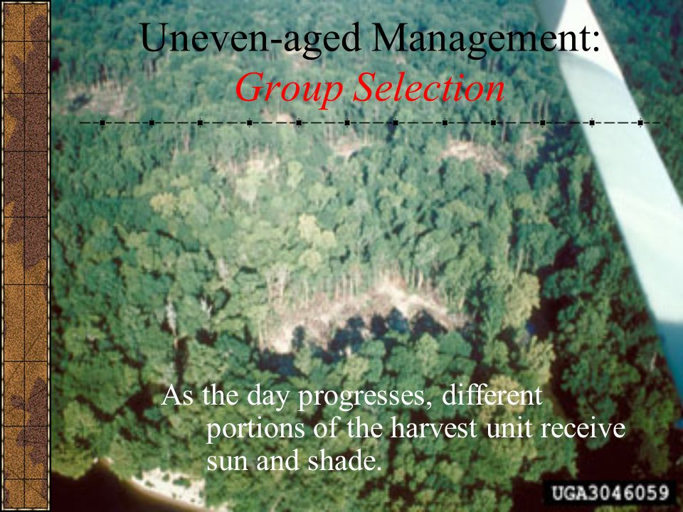 Uneven-aged Management: Group Selection
