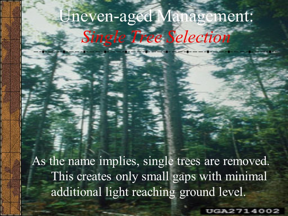Uneven-aged Management: Single Tree Selection