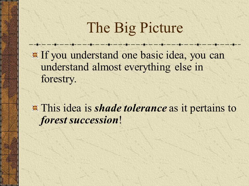 The Big Picture If you understand one basic idea, you can understand almost everything else in forestry.