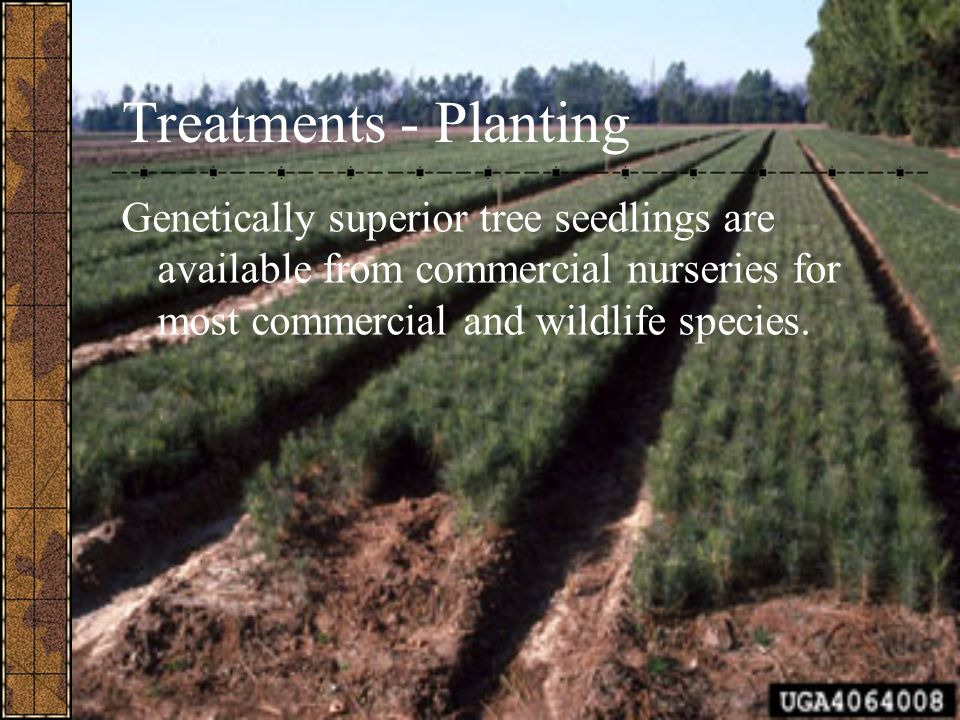 Treatments - Planting Genetically superior tree seedlings are available from commercial nurseries for most commercial and wildlife species.