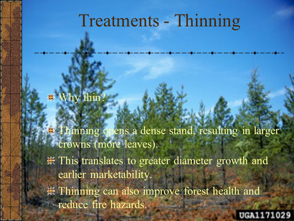 Treatments - Thinning Why thin