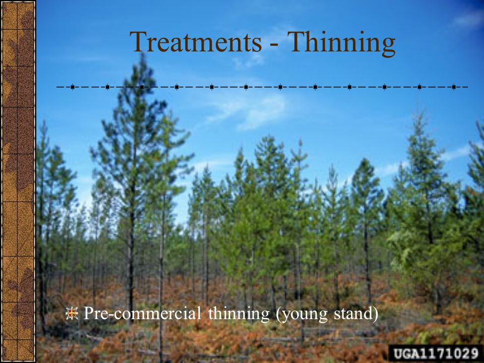 Treatments - Thinning Pre-commercial thinning (young stand)
