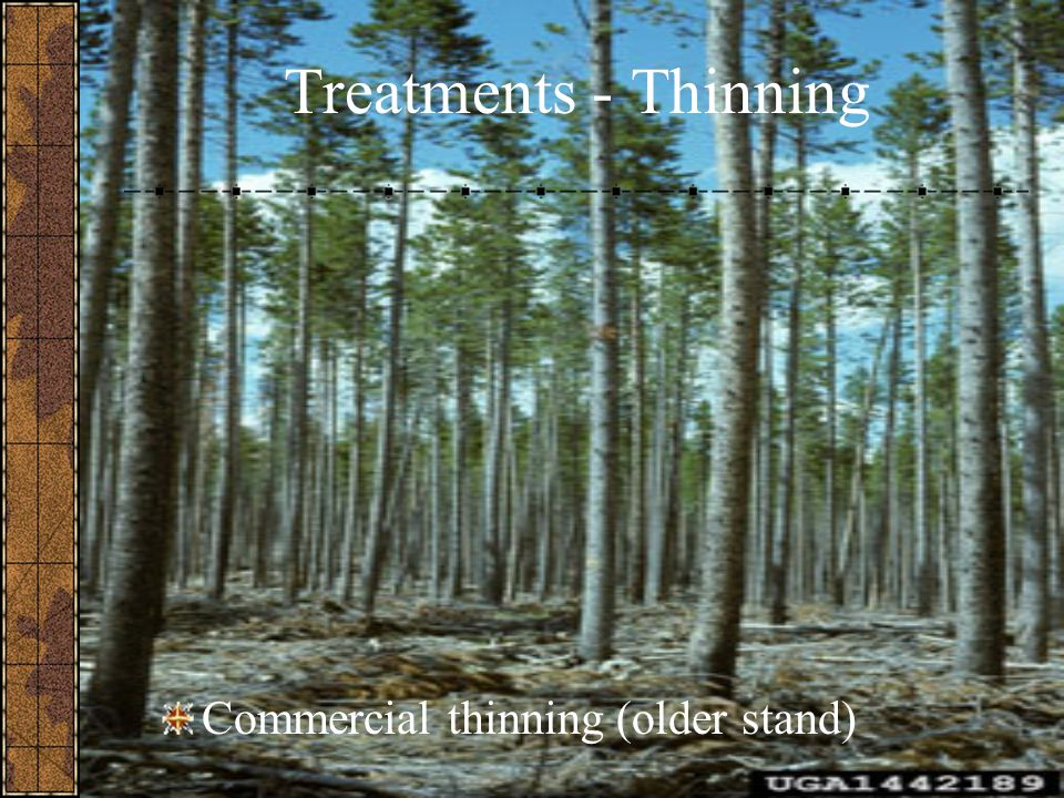 Treatments - Thinning Commercial thinning (older stand)