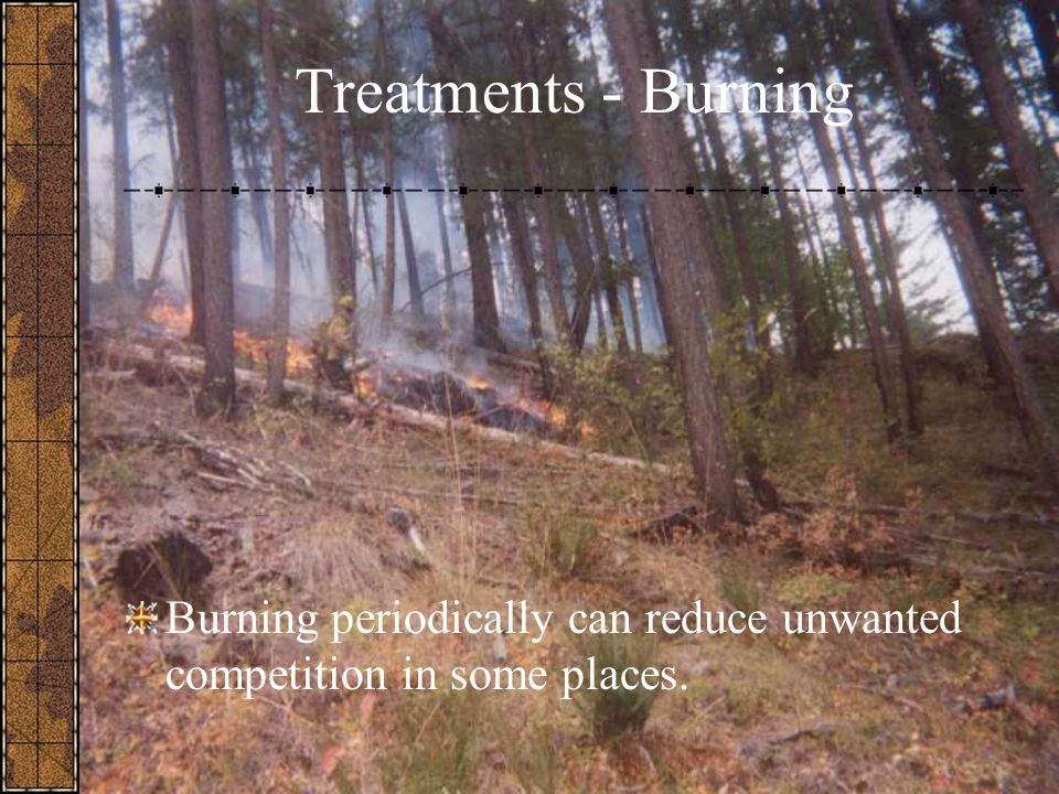 Treatments - Burning Burning periodically can reduce unwanted competition in some places.