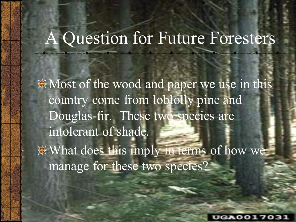 A Question for Future Foresters