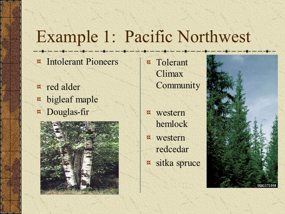 Example 1: Pacific Northwest