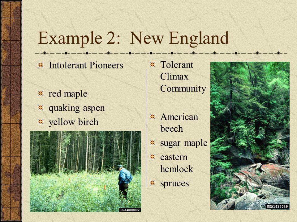 Example 2: New England Intolerant Pioneers Tolerant Climax Community