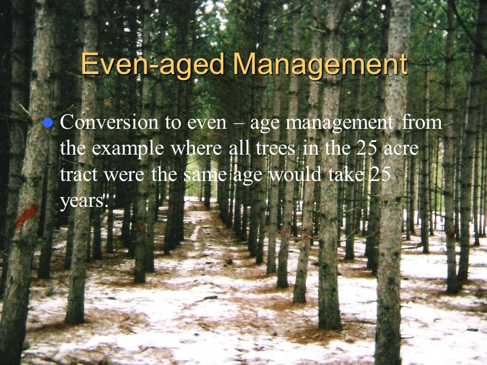 Even-aged Management Conversion to even – age management from the example where all trees in the 25 acre tract were the same age would take 25 years.
