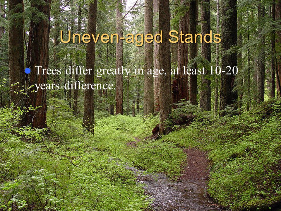 Uneven-aged Stands Trees differ greatly in age, at least 10-20 years difference.