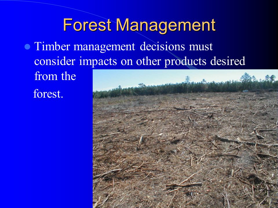 Forest Management Timber management decisions must consider impacts on other products desired from the.