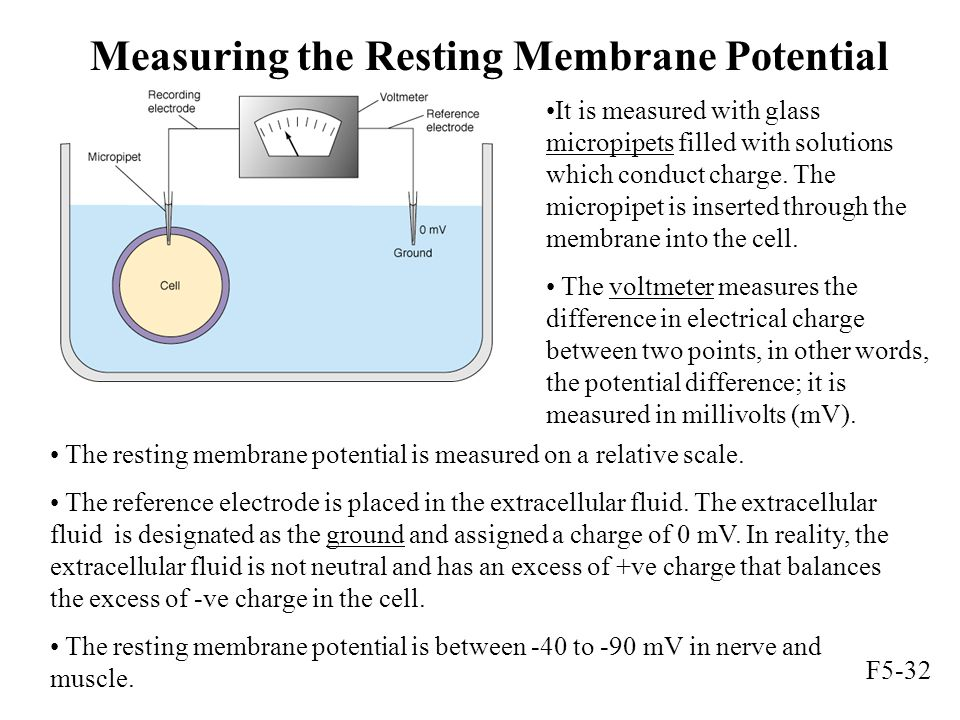 Measuring the Resting Membrane Potential